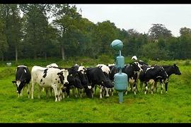 Kunst für Kühe 2012